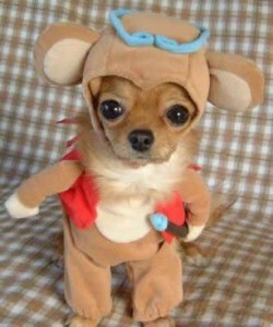 dog fun dressing costume puppy