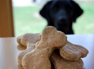 puppy dog treats