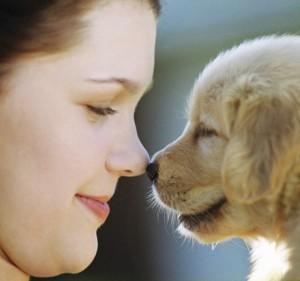 cute dog health care