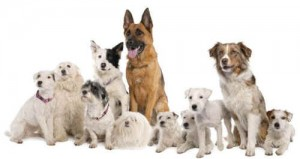dog breeds popular
