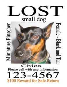 lost-dog-missing-pet-sign-template