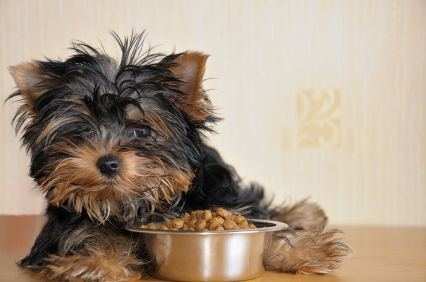 puppy premium dog food